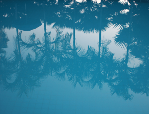 Palms trees reflected in blue water
